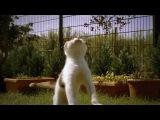 Кот - замедленная сьемка (прыкольно).